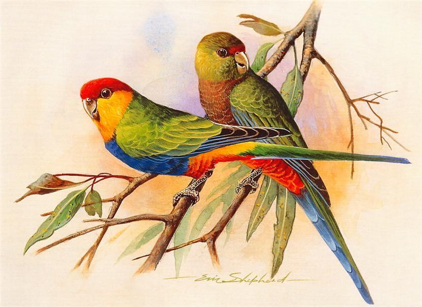 Image Du Blog Lusile17.Centerblog | Peinture Oiseau avec Coloriage Oiseaux Tropicaux