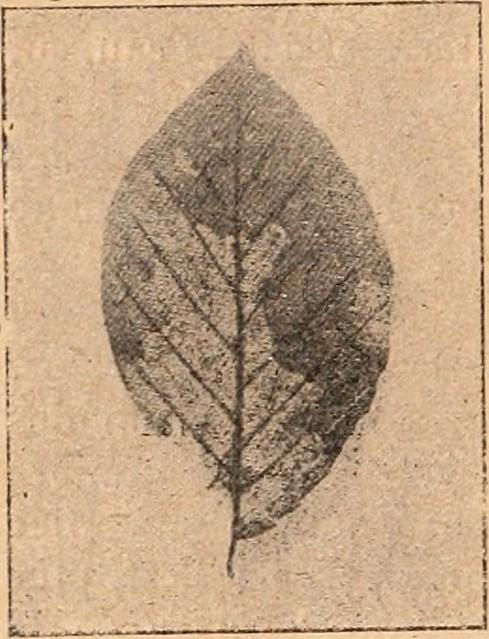 """Image From Page 283 Of """"Dictionnaire De Physiologie"""" (1913 intérieur Au Clair De La Lune Text"""