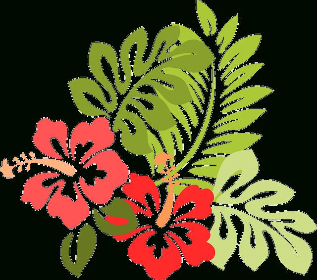 Image Gratuite Sur Pixabay - Hibiscus, Fleur, Feuilles tout Coloriage Hawaienne