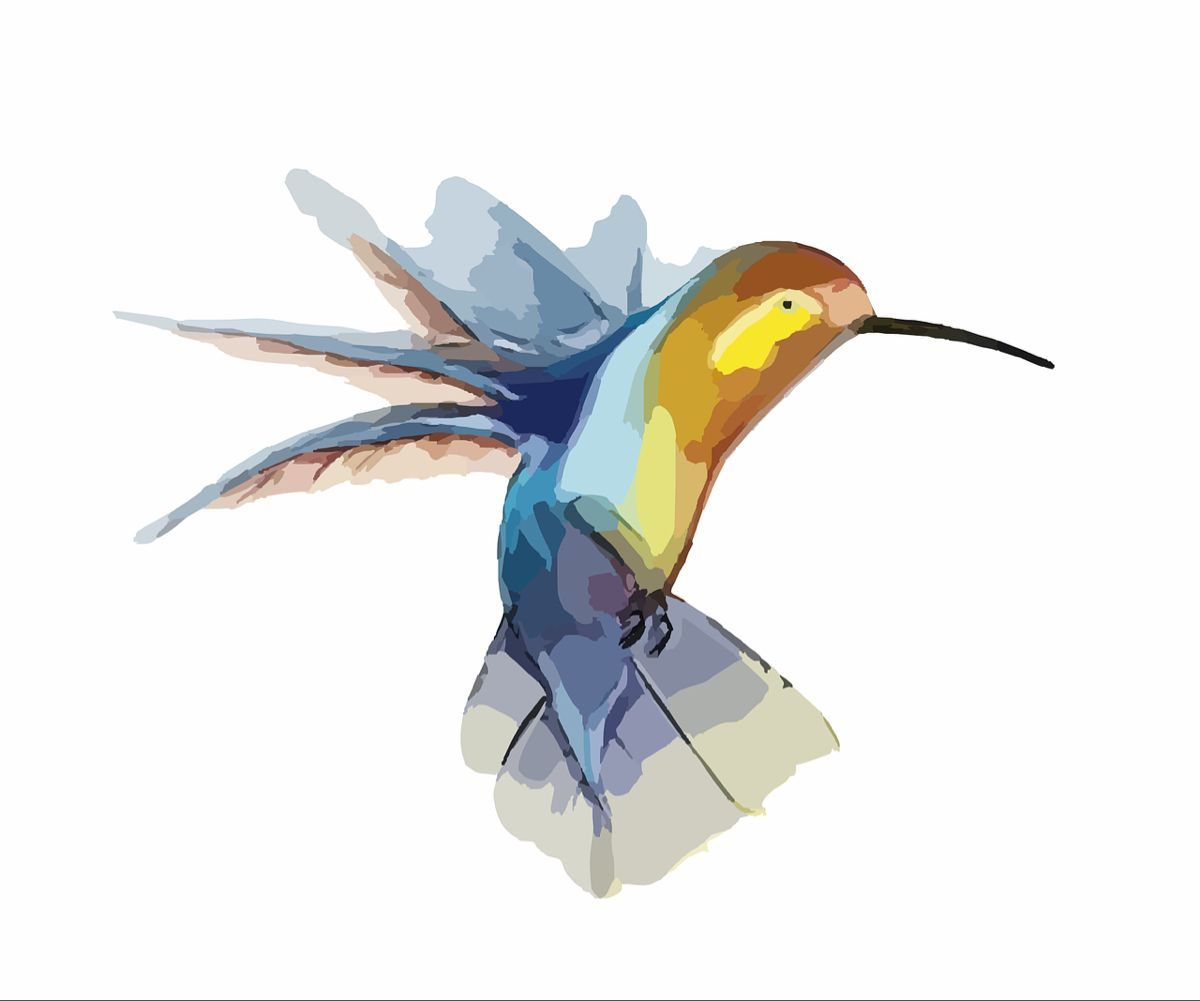 Images D Oiseaux Gratuites - Greatestcoloringbook intérieur Gratuites Oiseaux