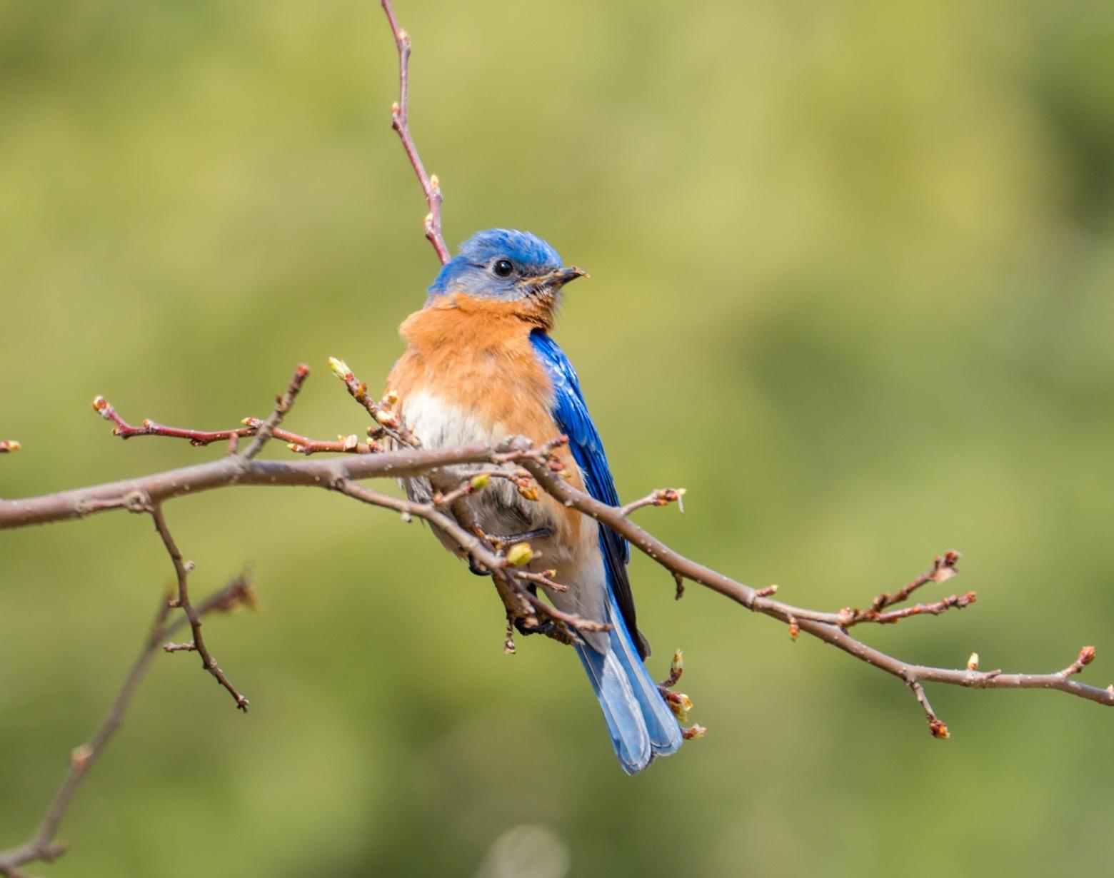 Images Gratuites : Oiseaux, Oiseau | Images Gratuites Et tout Gratuites Oiseaux