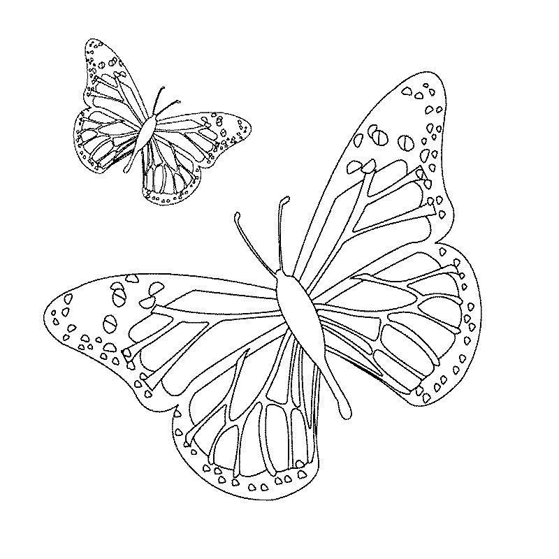 Imprime Le Dessin À Colorier De Papillon intérieur Dessin Petit Papillon