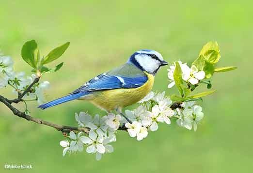 Jardin: Comment Faire Venir Les Oiseaux? - Famille - Notre concernant Gratuites Oiseaux