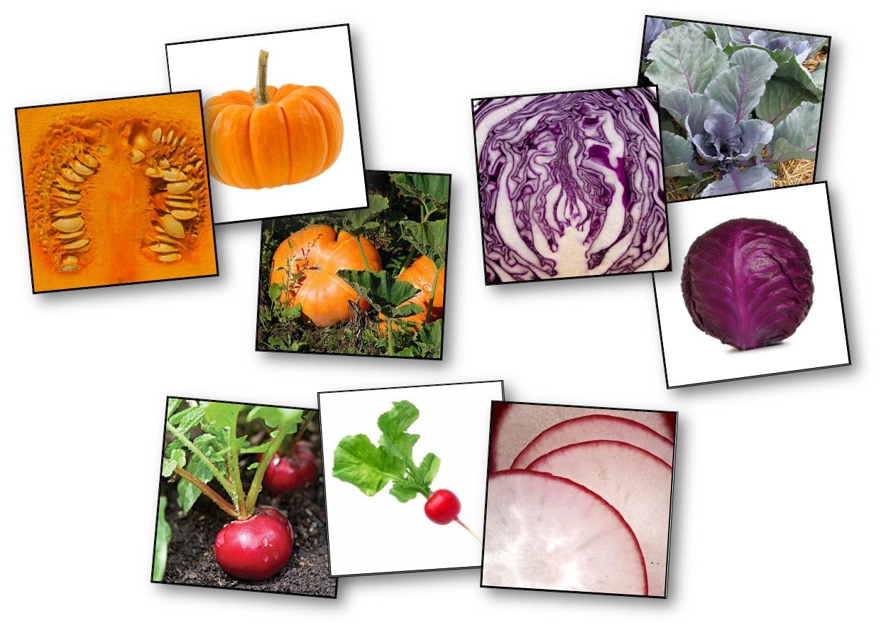 Jeu De Mémory Des Fruits Et Légumes : Détails Et dedans Jeu De Dedans