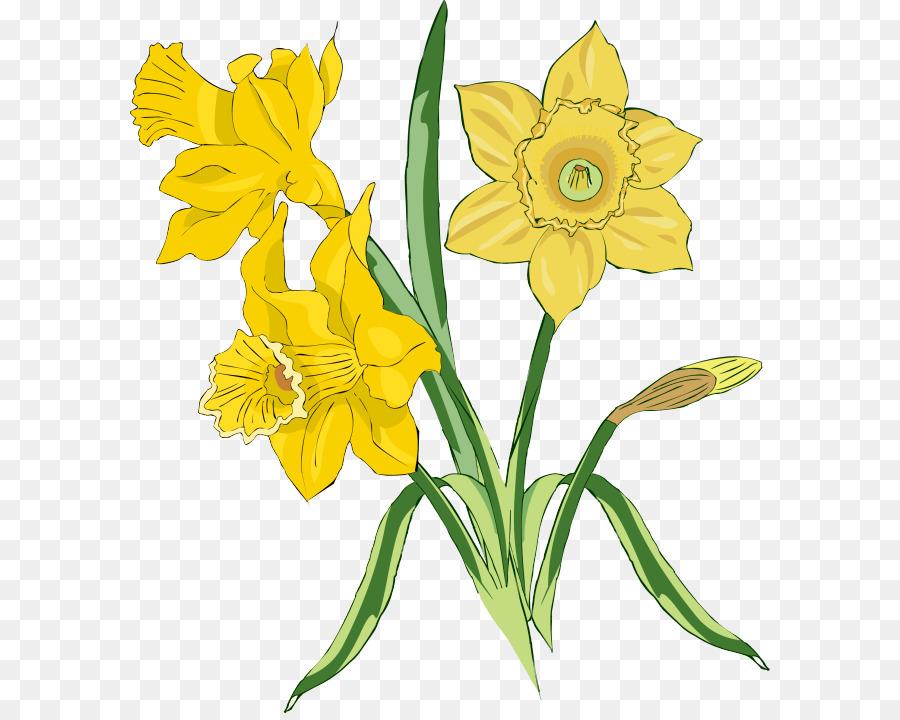 Jonquille, Fleur, Dessin Png - Jonquille, Fleur, Dessin à Dessin Jonquille Fleur