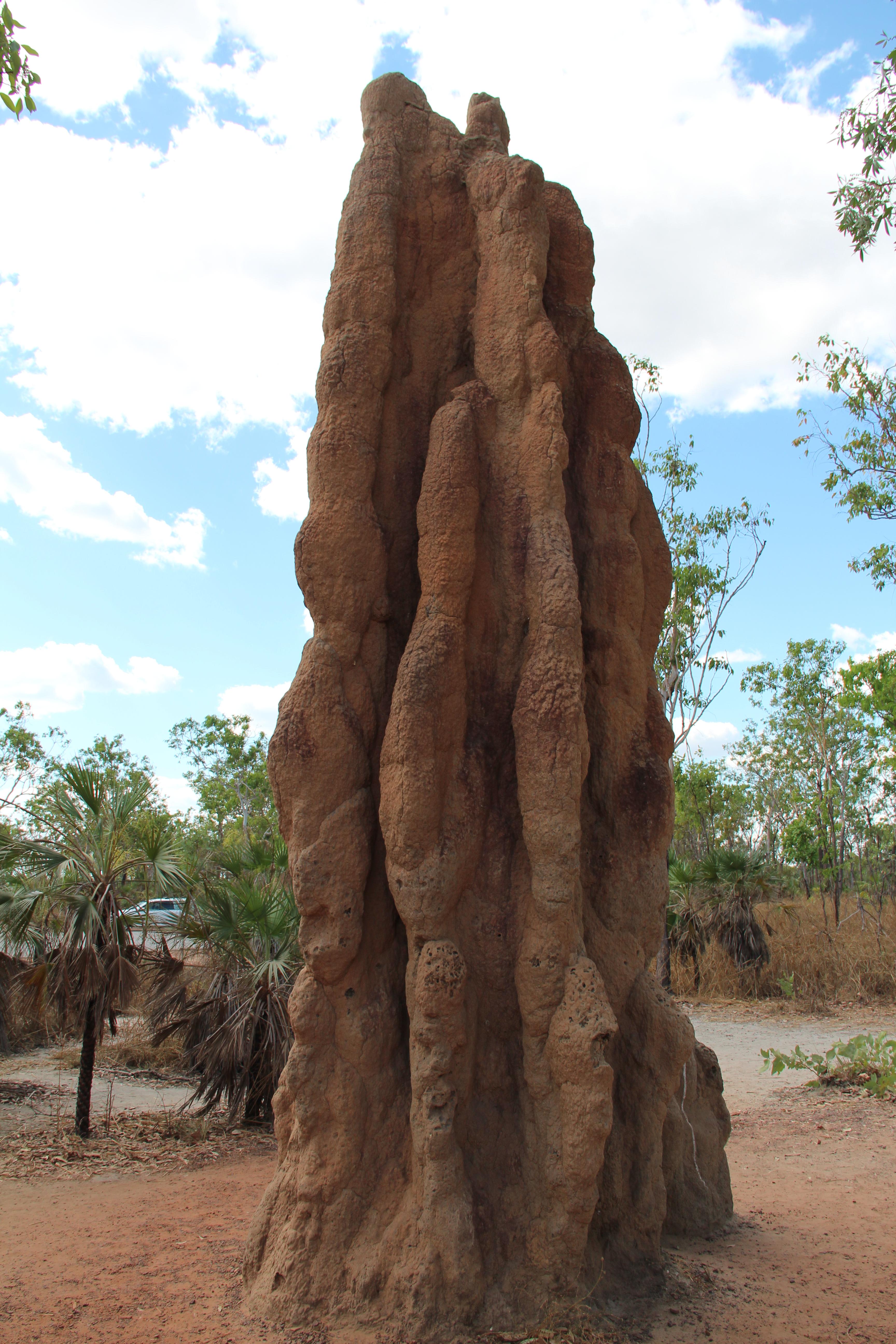 Jumping Crocodile & Litchfield National Park | Oz Ton Road concernant Y Avait Des Crocodiles