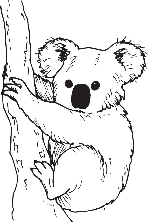 Koala - Réseau Canopé – Direction Territoriale Académies dedans Coloriage De Koala