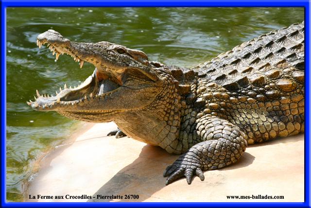 La Ferme Aux Crocodiles A Pierrelatte (26700) tout Y Avait Des Gros Crocodiles