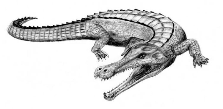 Le Plus Gros Crocodile Du Monde : 15 Espèces Disparues pour Y Avait Des Gros Crocodiles
