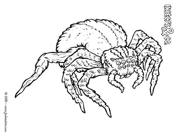 Les 84 Meilleures Images Du Tableau Coloriages Animaux destiné Dessin Araignée Facile