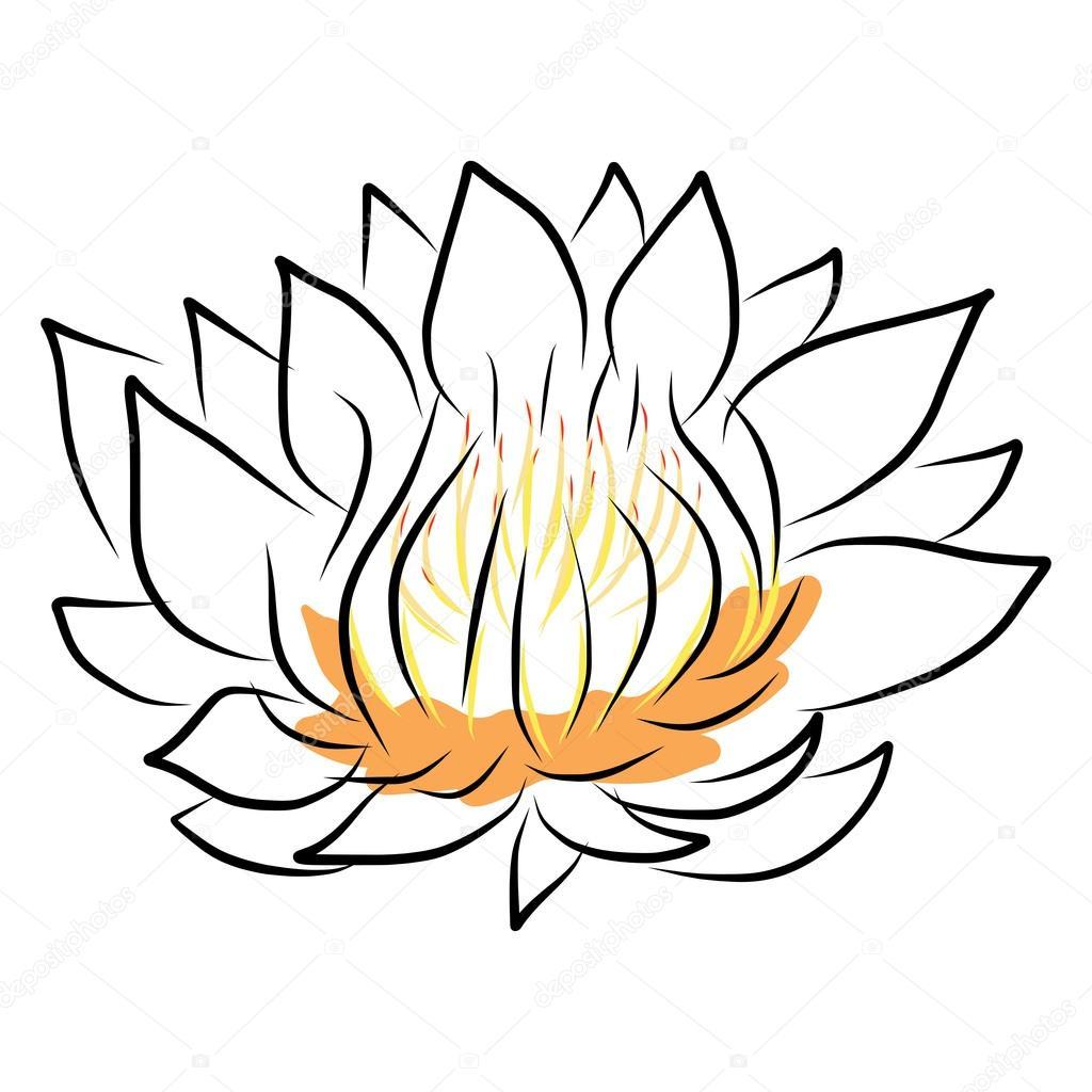 Main, Dessin Nénuphar, Lotus, Fleur — Image Vectorielle à Nénuphar Dessin