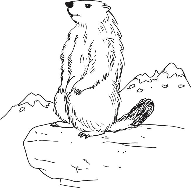 Marmotte - Réseau Canopé – Direction Territoriale pour Dessin De Marmotte