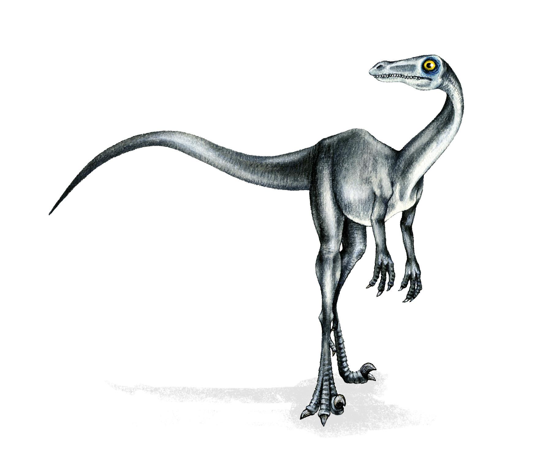 Meilleur Pour Realiste Raptor Dessin Dinosaure - Random Spirit pour Comment Dessiner Un Dinosaure