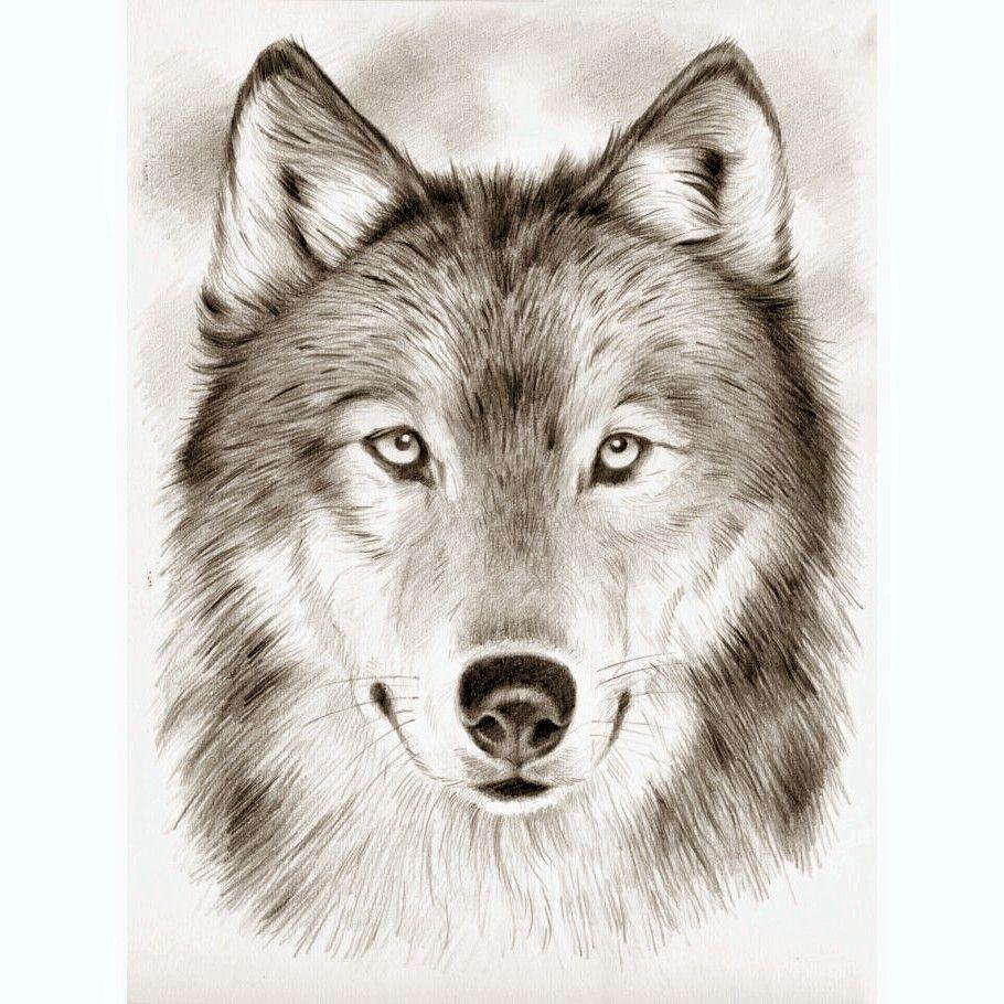 Meilleure Nouvelle Tete De Loup Dessin Facile De Face tout Loup Dessin Facile