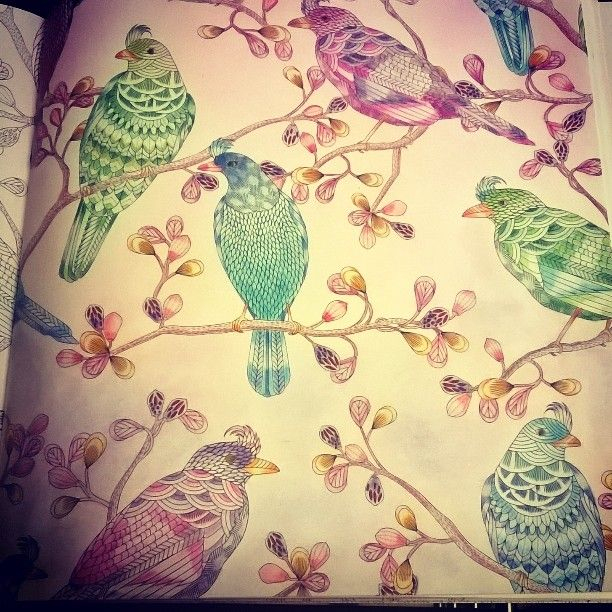 My Tropical Birds From #Wildsavannah #Milliemarotta # dedans Coloriage Oiseaux Tropicaux