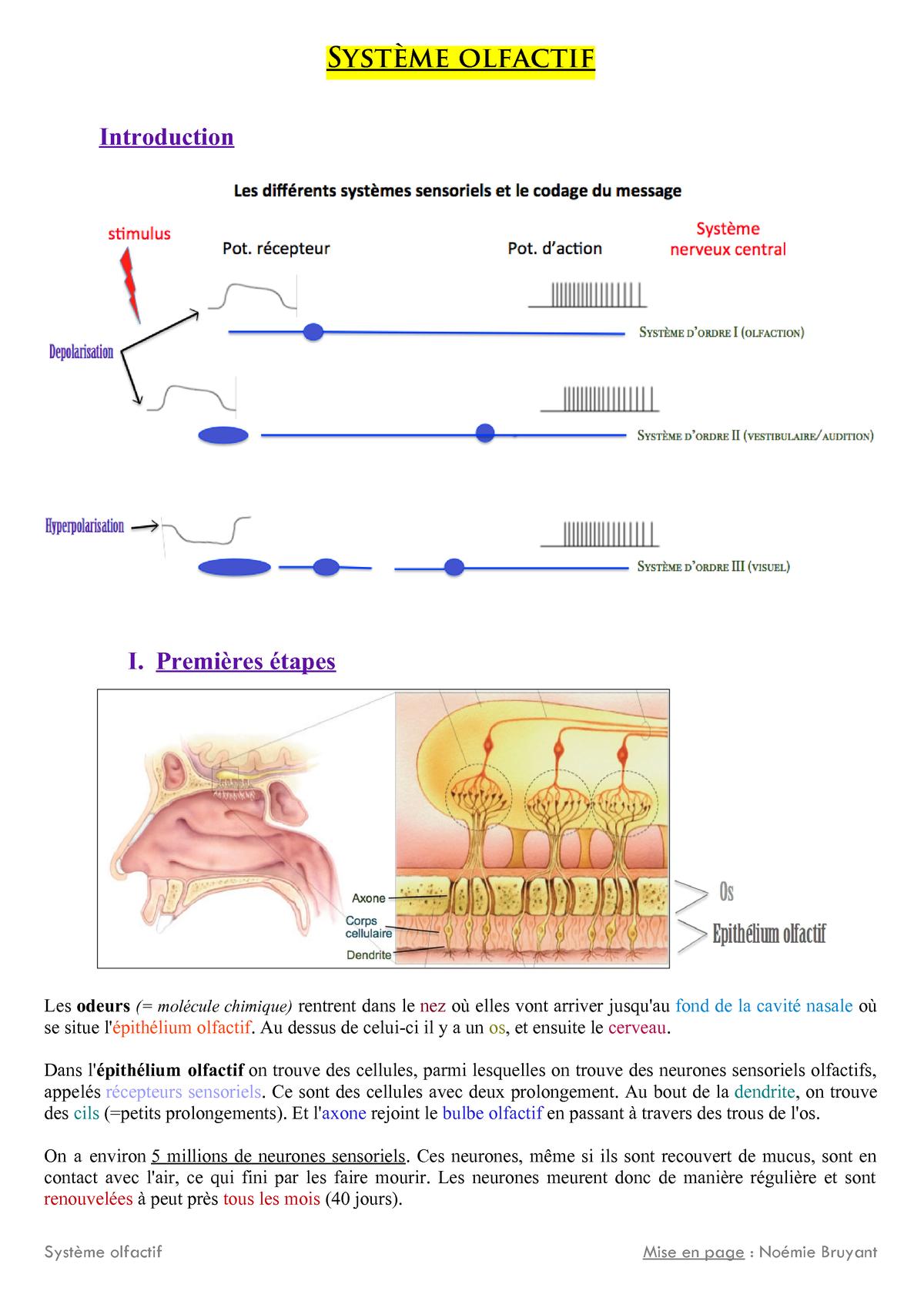 Neurosciences - Olfactif - Neurosciences - Studocu dedans ?Pith?Lium Olfactif
