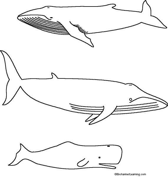 Nos Jeux De Coloriage Baleine À Imprimer Gratuit - Page 8 intérieur Coloriage Baleine A Imprimer Gratuit