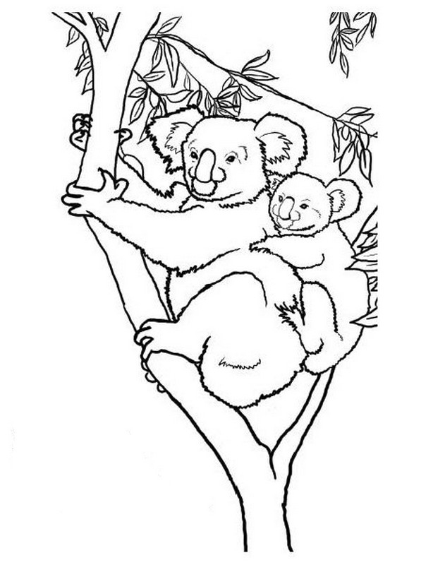 Nos Jeux De Coloriage Koala À Imprimer Gratuit - Page 4 Of 8 tout Coloriage De Koala
