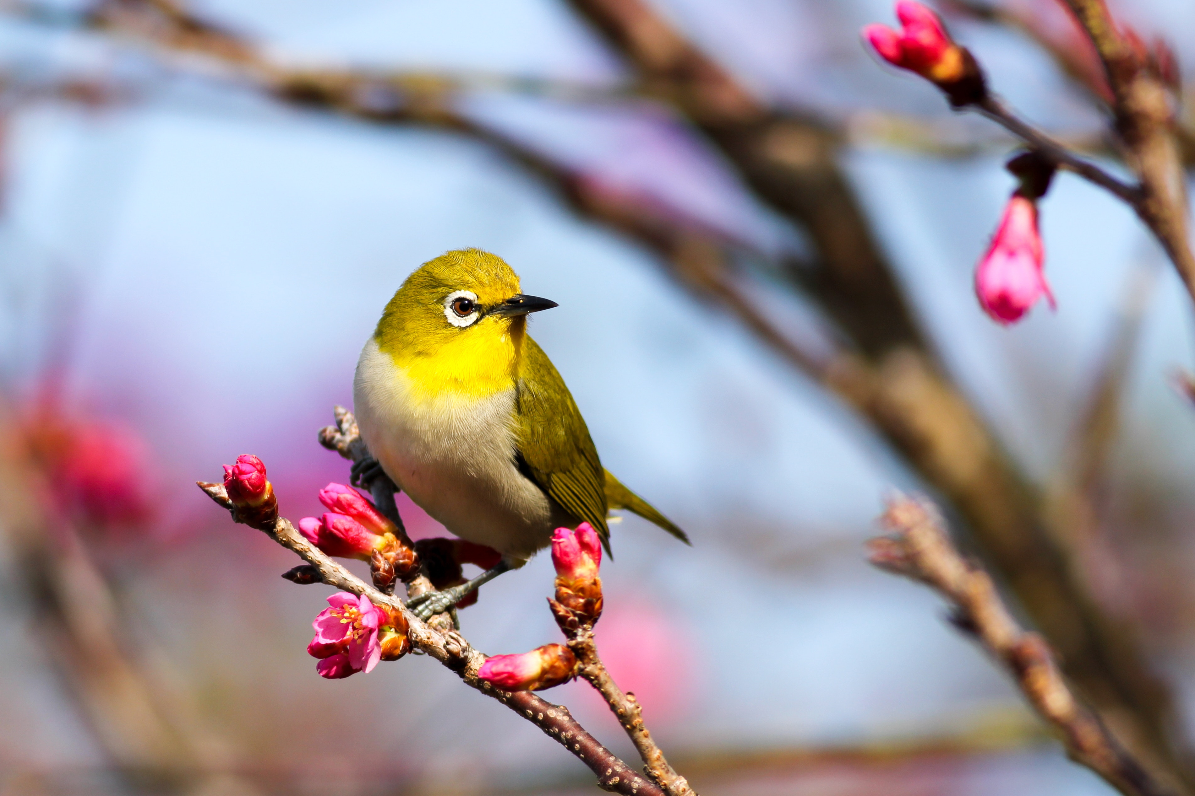 Nourrir Les Oiseaux En Hiver : Comment S'Y Prendre intérieur Fond D'?Cran Oiseaux Exotiques