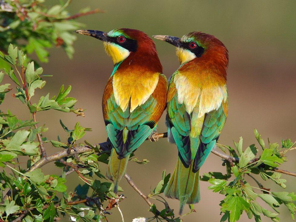 Oiseaux à Fond ?Cran Oiseaux Exotiques