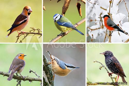 """""""Oiseaux Des Jardins Francais"""" Photo Libre De Droits Sur serapportantà Gratuites Oiseaux"""