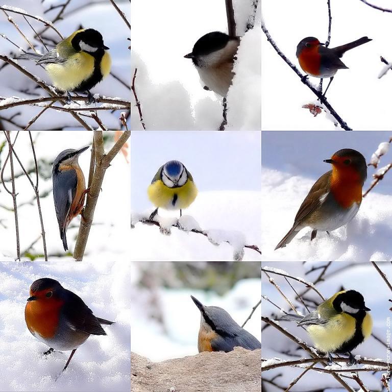 Oiseaux Melange 01 Animal - Aves - Photo - Fond-Ecran-Image serapportantà Fond ?Cran Fleurs Et Oiseaux