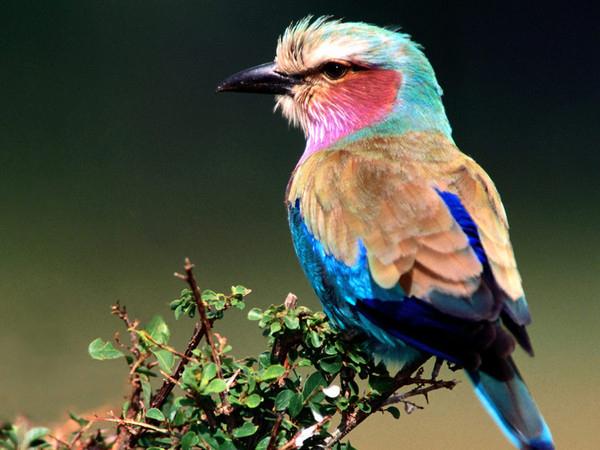 Oiseaux : Wallpaper, Fond D'Écran, Photo, Image, Fond destiné Fond D'?Cran Oiseaux Exotiques