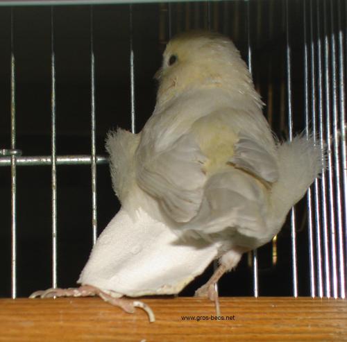 """Oui, Cela Arrive Aussi Chez Les """"Titis"""" - Les Amis Des dedans Oiseau Blessé Que Faire"""
