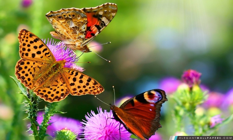 Papillons Et Fleurs. Fond D'Écran Hd À Télécharger pour Fond ?Cran Fleurs Et Oiseaux