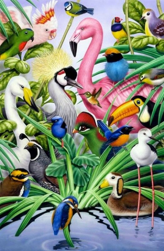 Peintures Howard Robinson | Art À Thème Oiseau, Peinture intérieur Coloriage Oiseaux Tropicaux