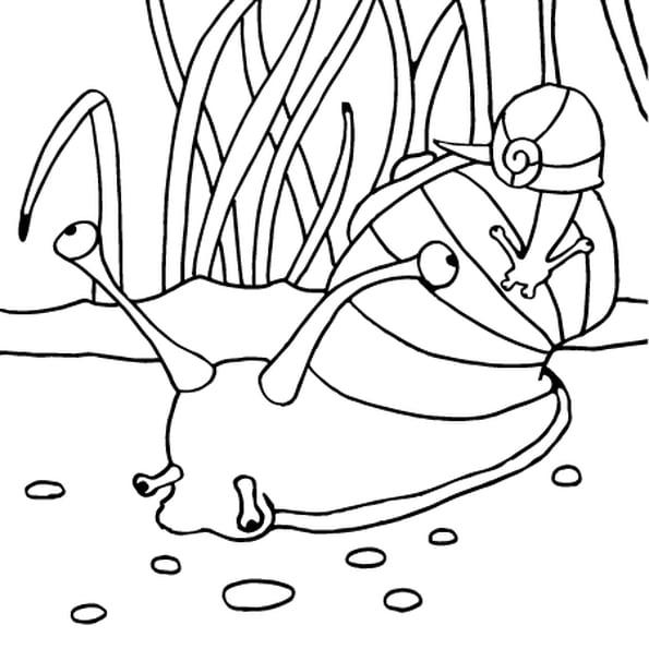 Photo Escargot A Imprimer - Ohbq destiné Photo Escargot A Imprimer