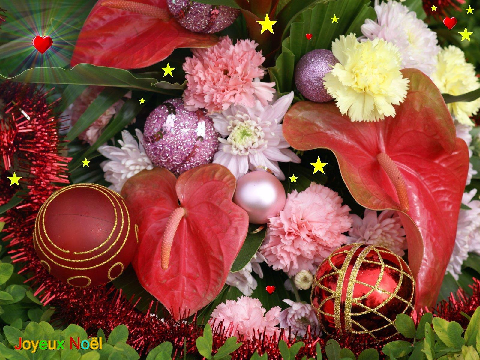 Photos Fleurs Exotiques Gratuites - Photo De Fleur : Une destiné Mot Exotique Font D ?Cran