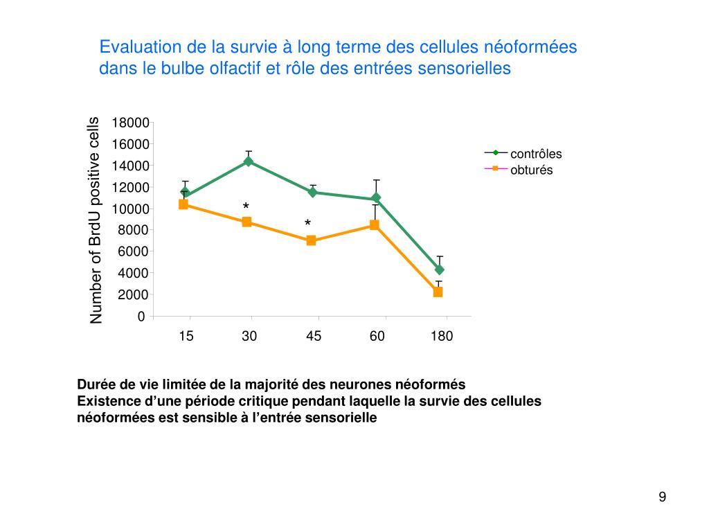 Ppt - Epithélium Olfactif Powerpoint Presentation, Free encequiconcerne ?Pith?Lium Olfactif