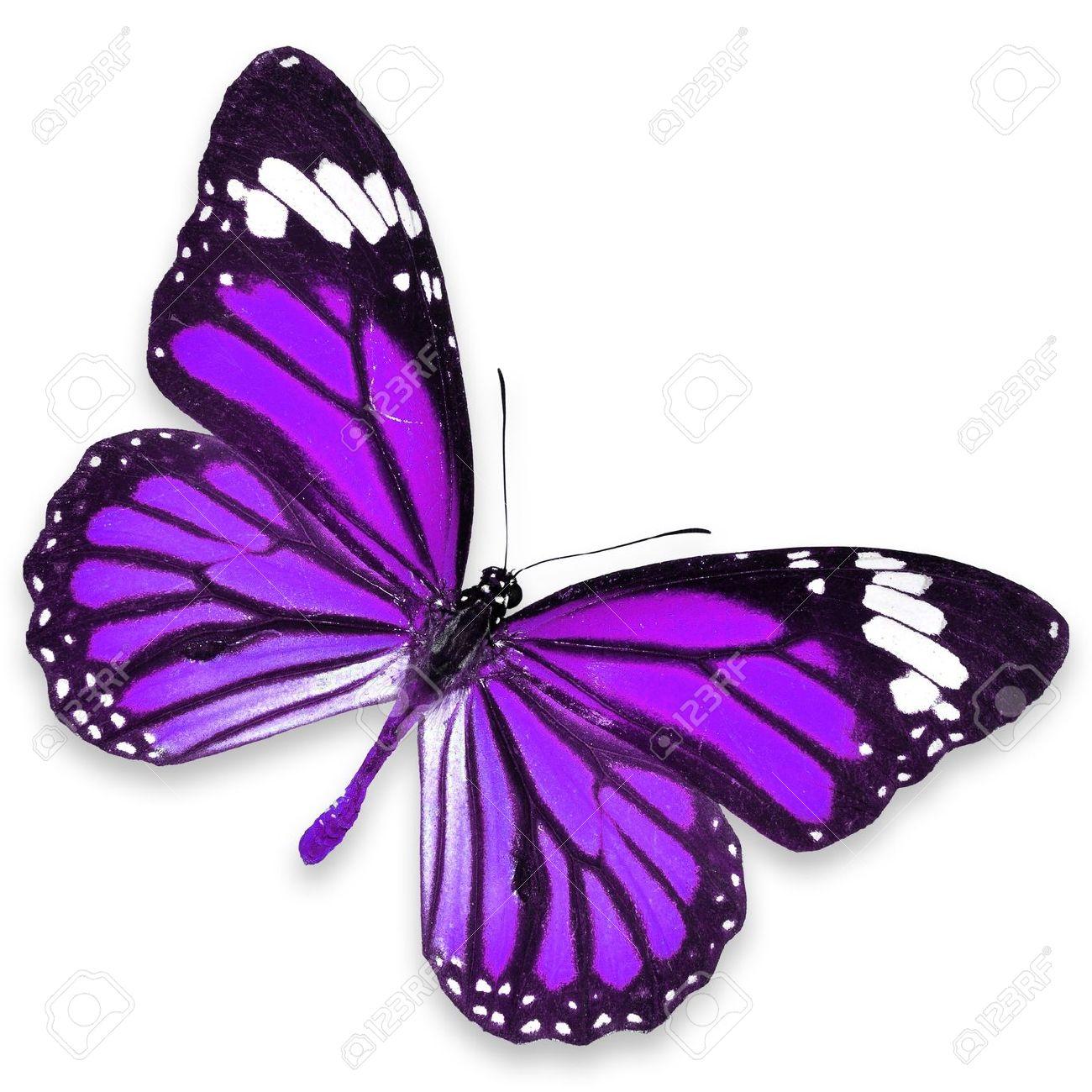 Purple Butterfly - Jattdisite concernant Dessin De Papillon En Couleur