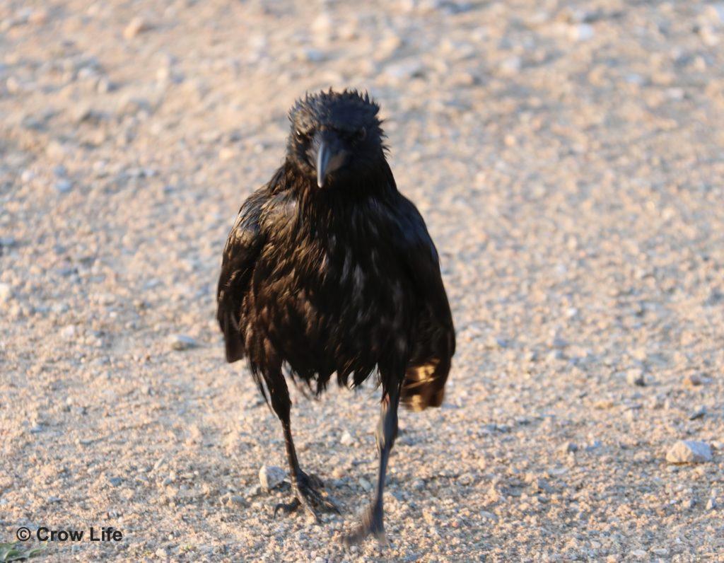 Que Faire Si Vous Avez Trouvé Un Oiseau Blessé Ou Un encequiconcerne Oiseau Blessé Que Faire
