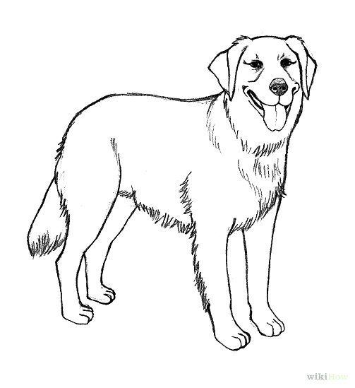 Realistic Golden Retriever Coloring Pages Photo   Dog concernant Dessin De Golden Retriever A Imprimer