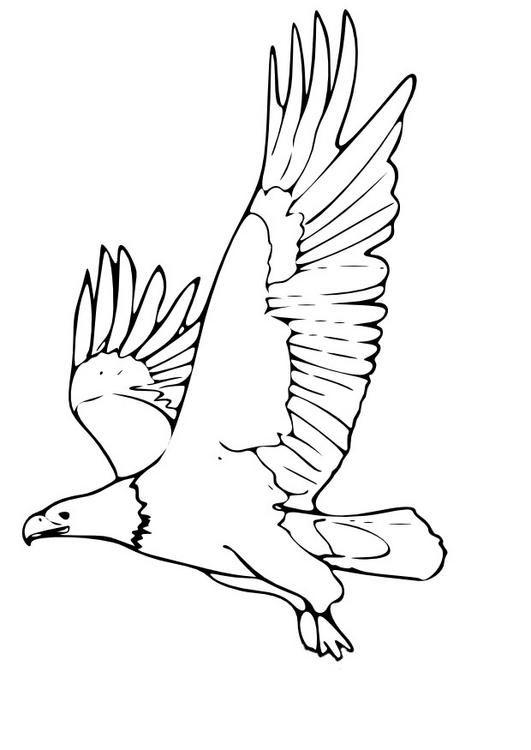 """Résultat De Recherche D'Images Pour """"Aigle Royal Dessin encequiconcerne Coloriage Aigle A Imprimer Gratuit"""