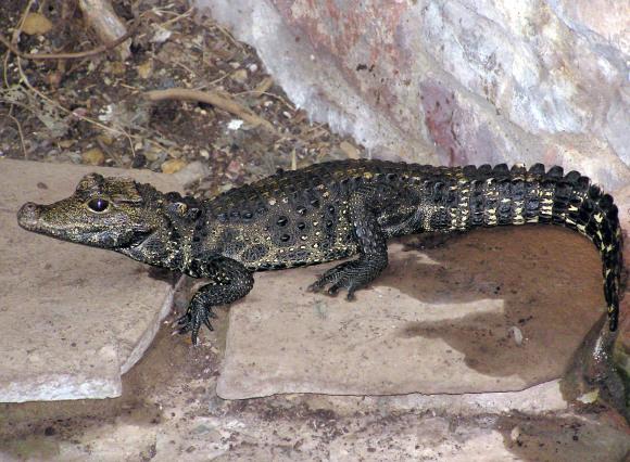 Seine-Saint-Denis : Un Crocodile Retrouvé Dans Une Voiture avec Y Avait Des Crocodiles