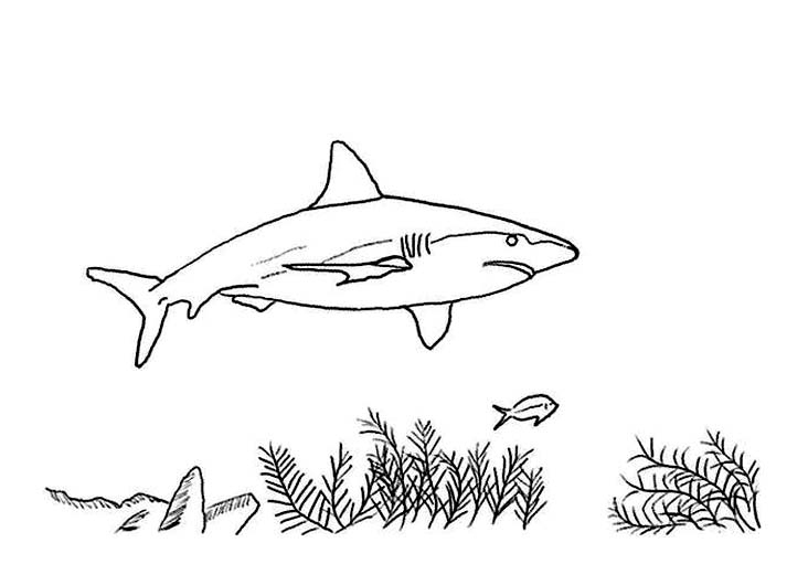 Sharks For Children - Sharks Kids Coloring Pages intérieur Coloriage Requin