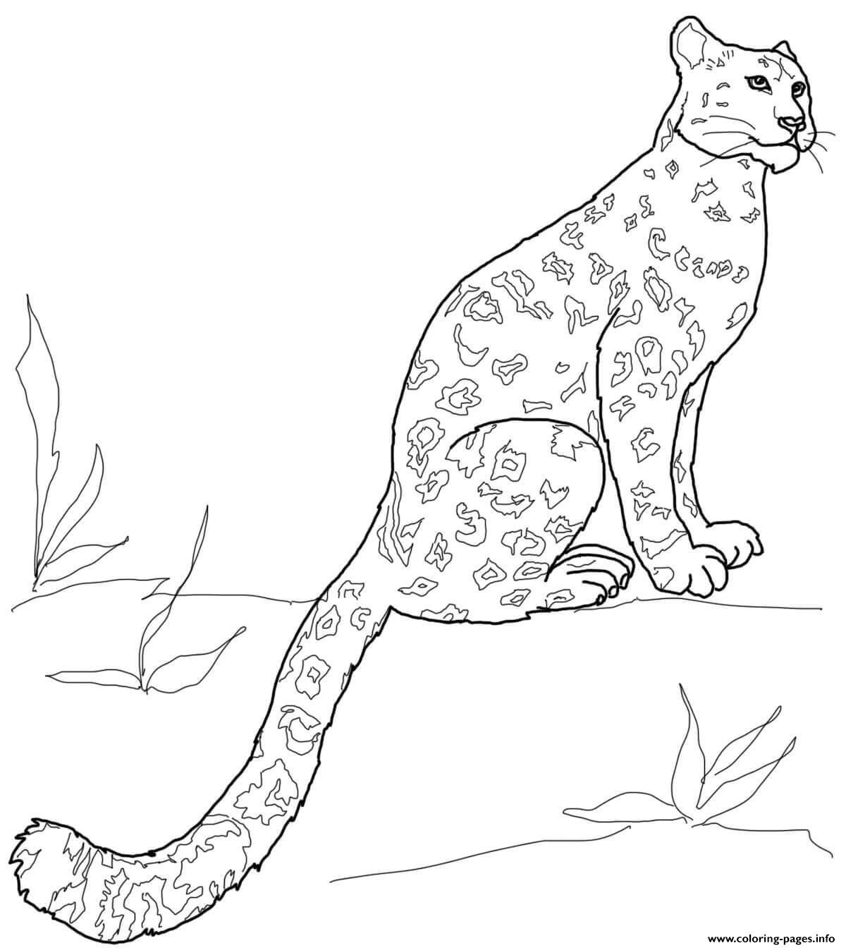 Snow Leopard Sitting Coloring Pages Printable intérieur Coloriage Panthere