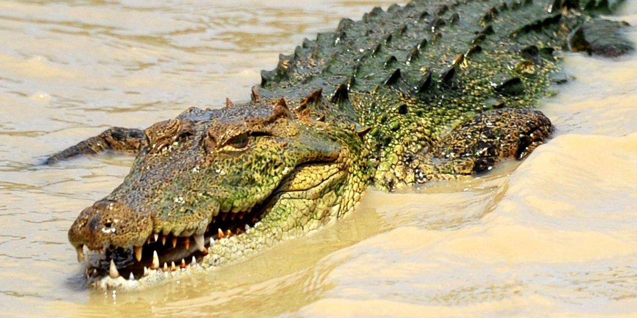 Sri Lanka : Un Journaliste Britannique Tué Par Un Crocodile serapportantà Y Avait Des Crocodiles