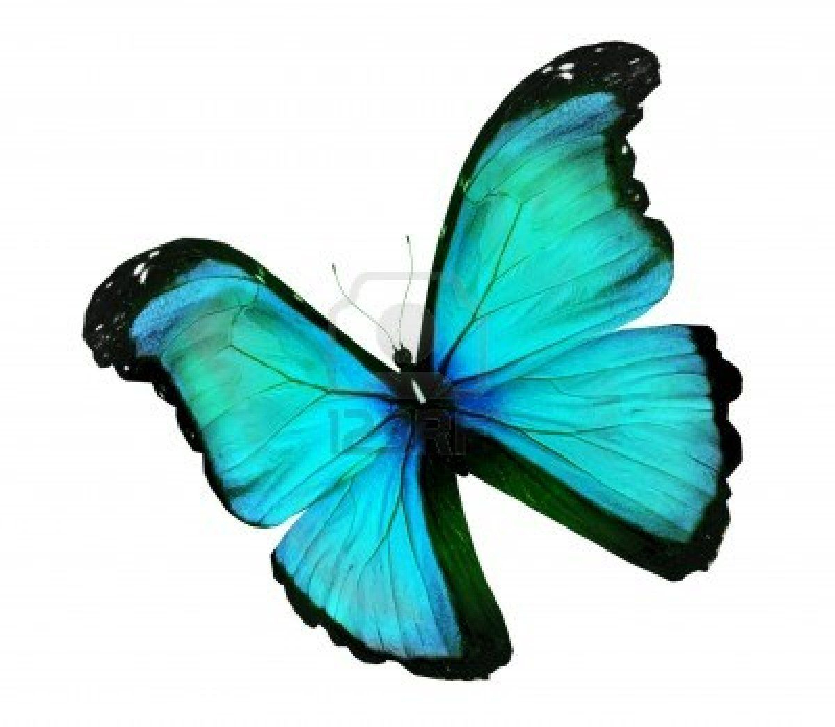 Stock Photo | Butterfly, Color, Turquoise Color destiné Dessin De Papillon En Couleur