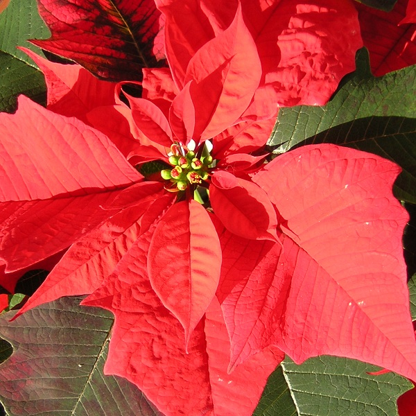 Symboles De Noël à Symbole Noel