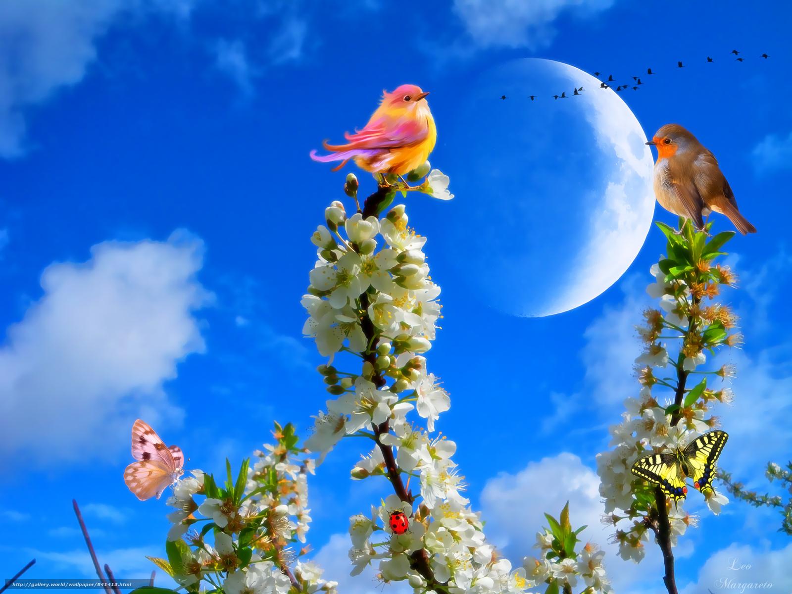 Tlcharger Fond D'Ecran Branch, Fleurs, Oiseaux, Papillon tout Fond D'?Cran Gratuit D'Oiseaux