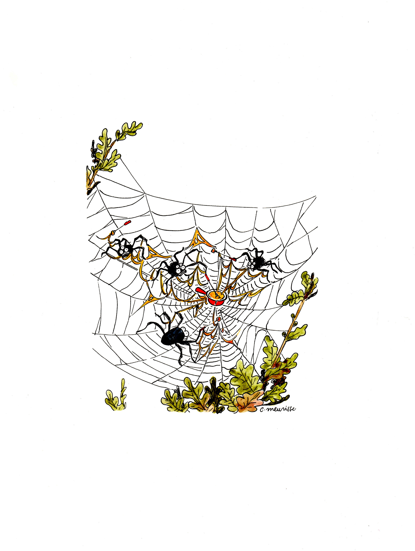 Toile D'Araignée | Catherine Meurisse | Exposition Dessins destiné Toile D Araignée Dessin