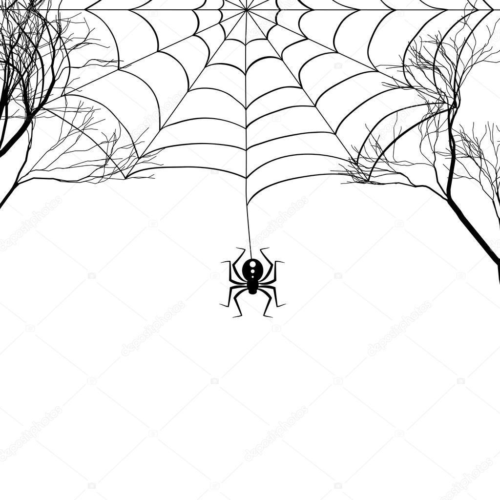 Toile D'Araignée Entre Les Branches D'Arbres Et Une Petite destiné Toile D Araignée Dessin