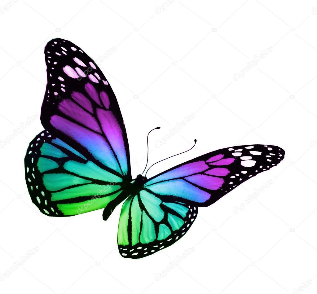 Turquoise Violet Vlinder, Geïsoleerd Op Witte Achtergrond serapportantà Dessin De Papillon En Couleur