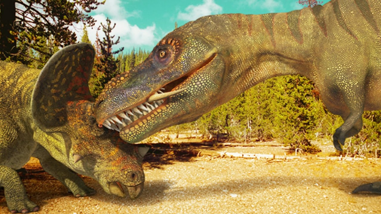 Tyrannosaure Vs Tricératops (Dinosaures) - Zapping Sauvage concernant Dinosaure Tyrex