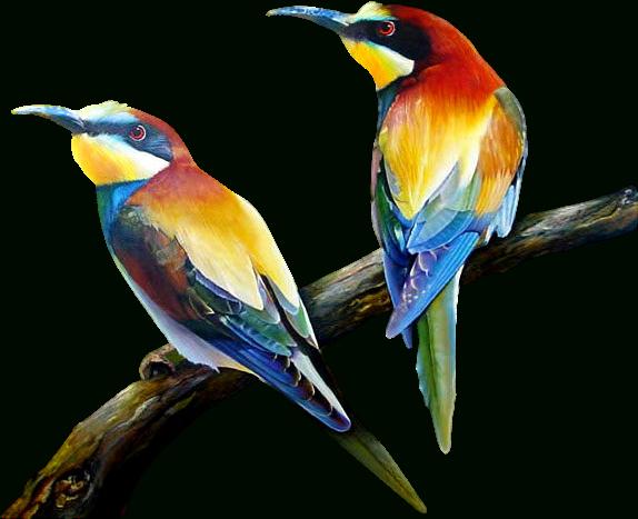 Uccelli E Rapaci - Page 3 dedans Fond D'?Cran Oiseaux Exotiques