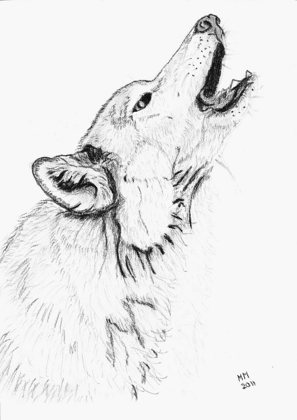 Unique Coloriage Tete De Loup A Imprimer | Haut Coloriage encequiconcerne Loup Dessin Facile